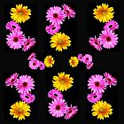 Pink and Yellow Gerberas by TeAnne