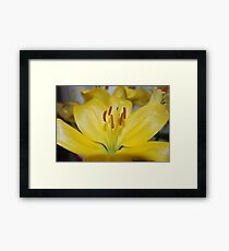 Yellow Surprise Framed Print