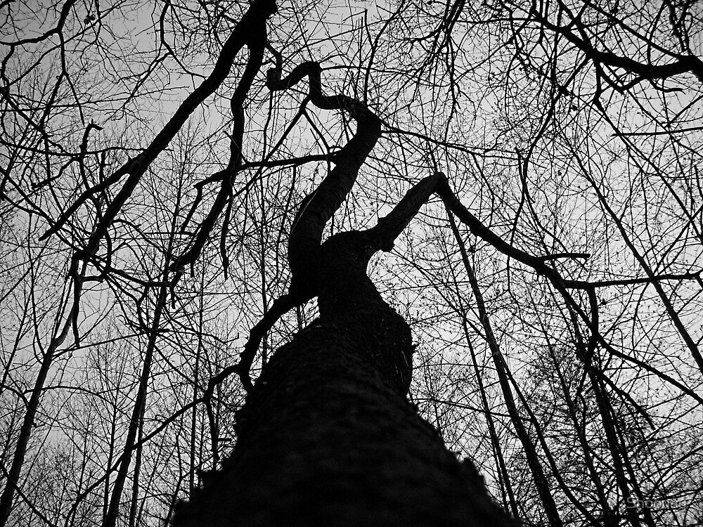 Yet Another Freaky Tree by Shoonay