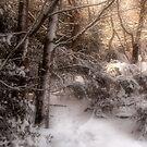 Footsteps in the Snow by Ann Garrett