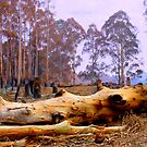 After the Fires by maureenclark
