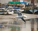 Herring Gull by Nigel Bangert