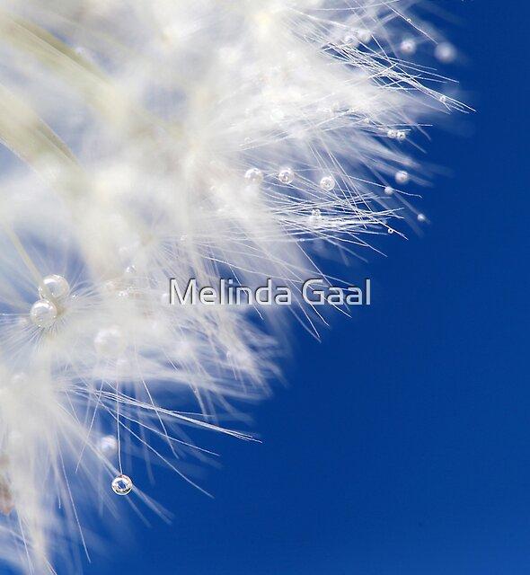 White pearls by Melinda Gaal
