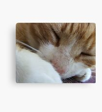 Kipper Kips Canvas Print