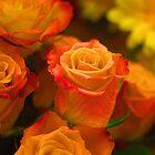 Orange Rosen von TeAnne