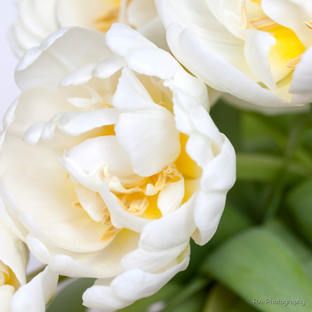 Dreamy, Floaty White Tulips by RA-Photography