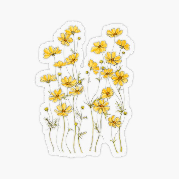 Yellow Cosmos Flowers Transparent Sticker
