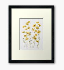 Yellow Cosmos Flowers Framed Print