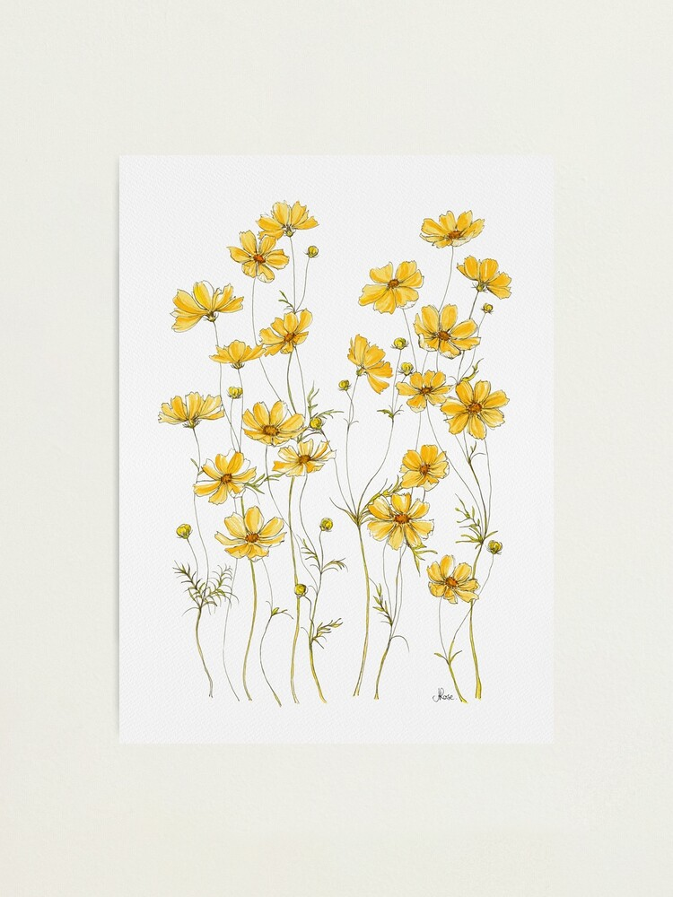 Alternate view of Yellow Cosmos Flowers Photographic Print
