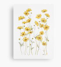 Lámina metálica Flores amarillas de cosmos