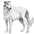 Borzoi hound by doggyshop