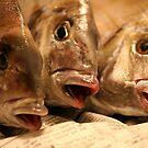 catch of the day by eelsblueEllen