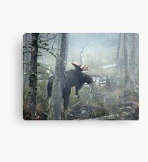 Bull Moose In Morning Mist Metal Print