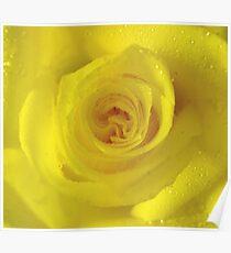 *YELLOW ROSE* Poster