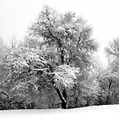 White Winter by Bellavista2