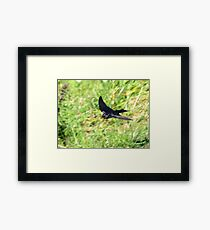 One Swallow Does Not a Summer Make Framed Print