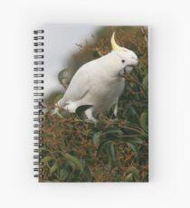 Sulphur Crested Cockatoo Spiral Notebook
