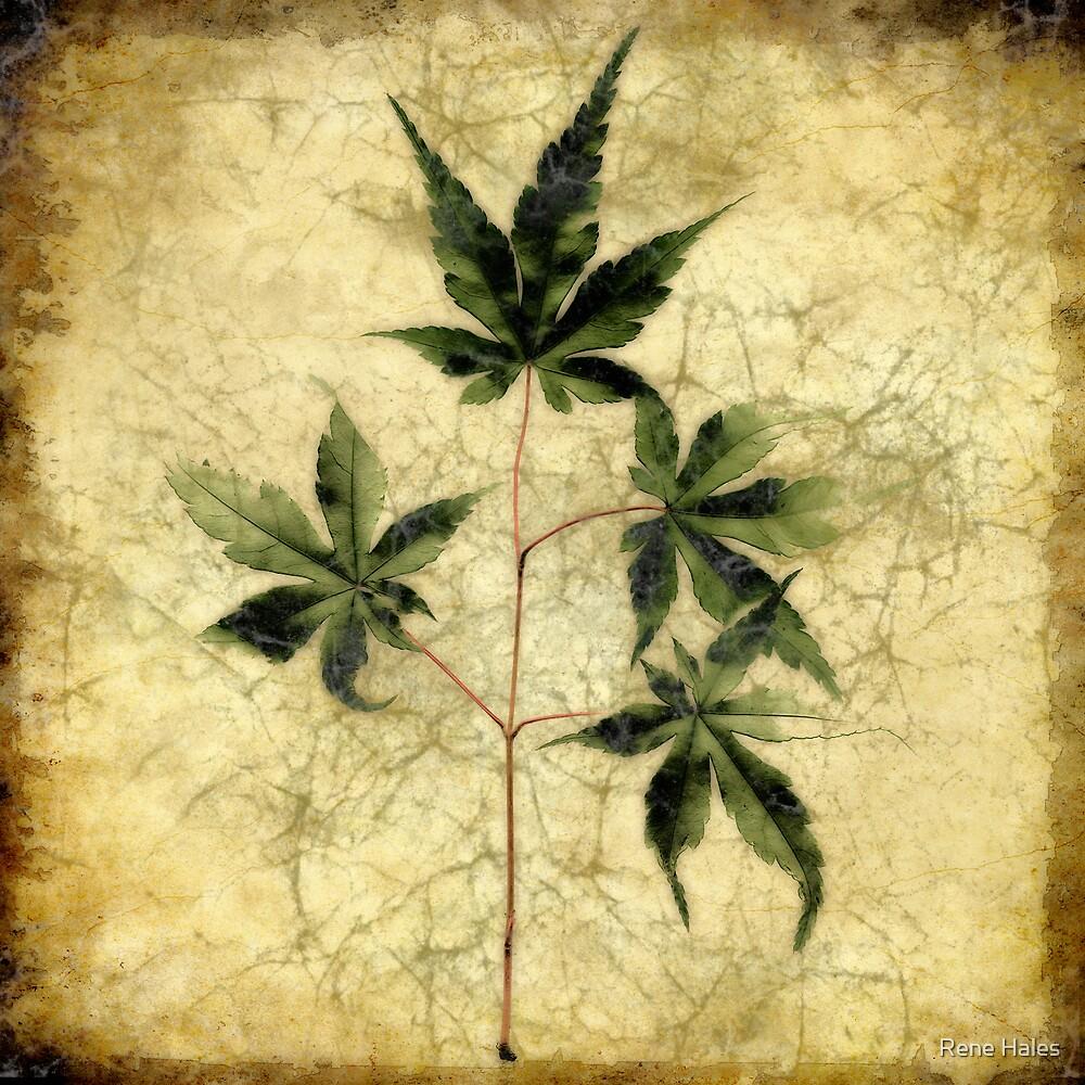 Maple Leaf Tile by Rene Hales