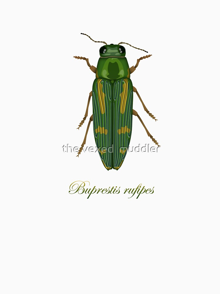 Buprestis rufipes - Red-legged Buprestis beetle by thevexedmuddler