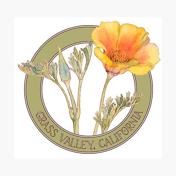 Grass Valley Poppy Photographic Print