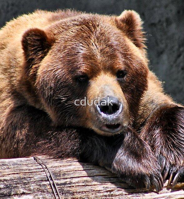 I'm Just A Teddy Bear by cdudak
