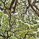 Kauai, Hawaii treescape by milton ginos