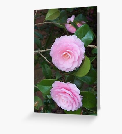 Pink Two Greeting Card