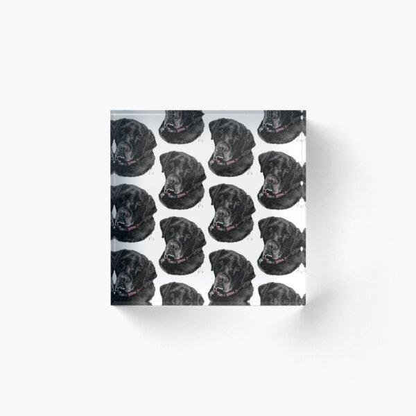 Sweet Old Black Labrador Retriever Acrylic Block