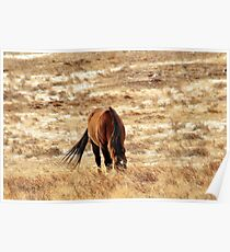 Little Horse on the Prairie Poster