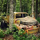 Wreck in the Woods by Tracy Friesen