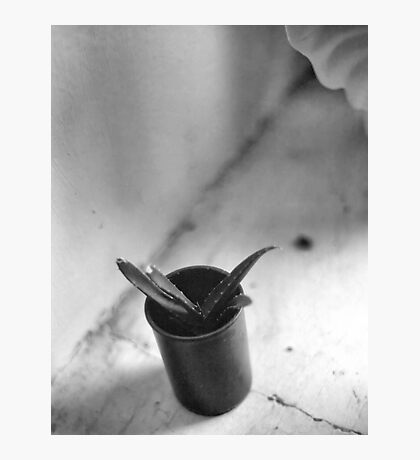 Cactus in a Film Can Photographic Print