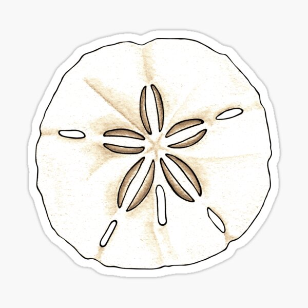 Sand Dollars Sticker