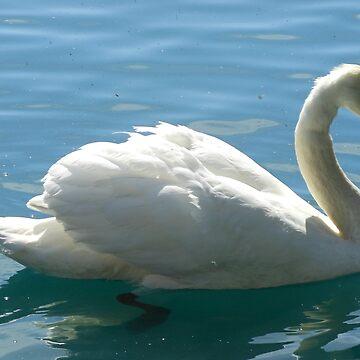 Swim, Swan, Swim by BlueMoonRose