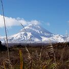 Mt Ngarahoe, New Zealand by wilderpisces