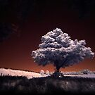 Tree (IR) by PaulBradley
