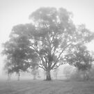 Tree in the Mist at Yan Yean by Pauline Tims