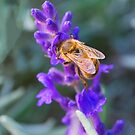 Busy Bee by Pauline Tims