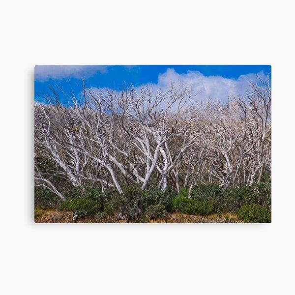 Trees at Mount Hotham, Victoria, Australia Canvas Print