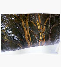 Perisher Valley Snowgums Poster