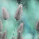 Nature's softness by Anne Staub