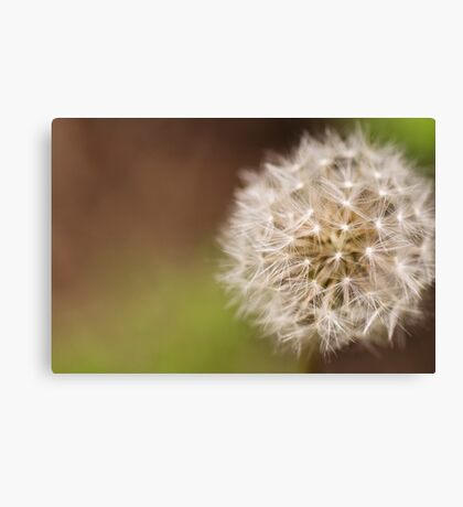 Parachute Ball Canvas Print