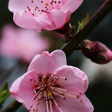Beautiful Blossom by LozzaElizabeth