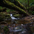 Tasmanian Rainforest. by Warren  Patten