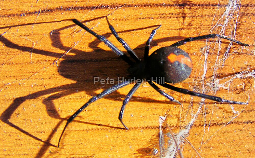 Red Back by Peta Hurley-Hill