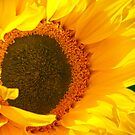 Sunny Sunflower by hurmerinta