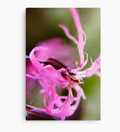 Pink (from wild flowers collection) Canvas Print