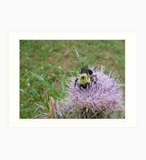 Bumble bee. Art Print