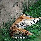 Tired Kitty by Kiona  Graley