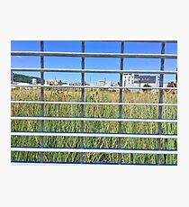 Grass Through The Grate Photographic Print
