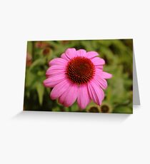 Pink Flower Head Greeting Card